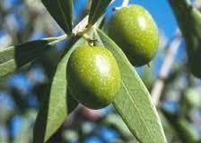 08-l'olive